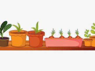 semis en pot dessin_resultat